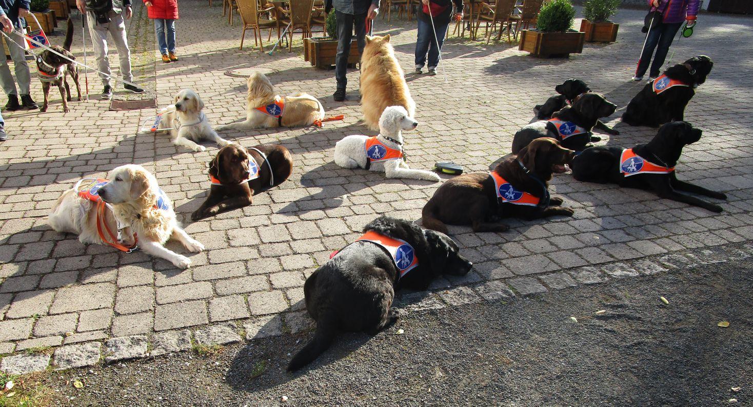 Bild 1 vom Blindenführhundhalterseminar
